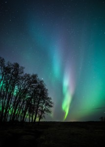 Aurora Dancing with Trees