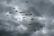 Flock of birds with storm clouds photo