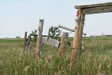 Old fence through grassy field photo